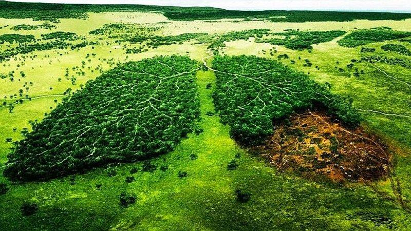 Természetvédelmi engedélyügyek